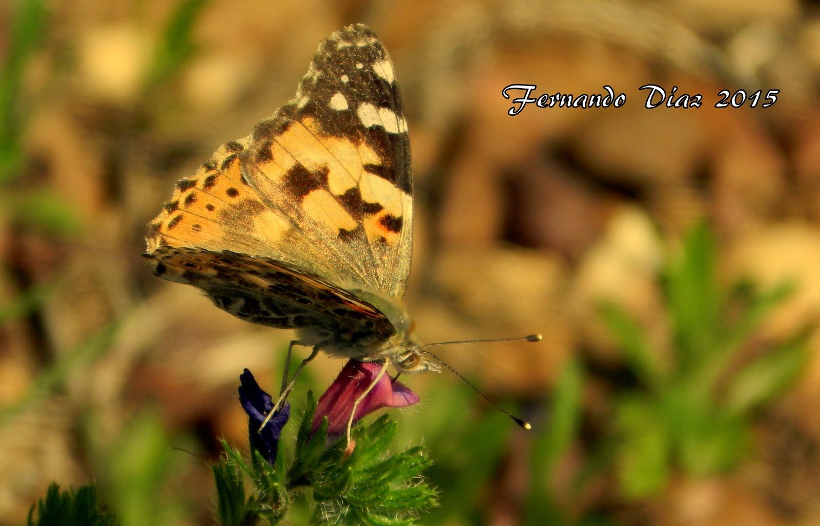 Una mirada a las mariposas
