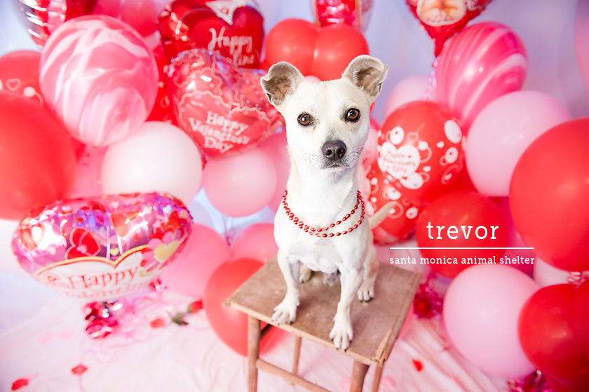 Cute Valentine Animals Extremely Cute Valenti...