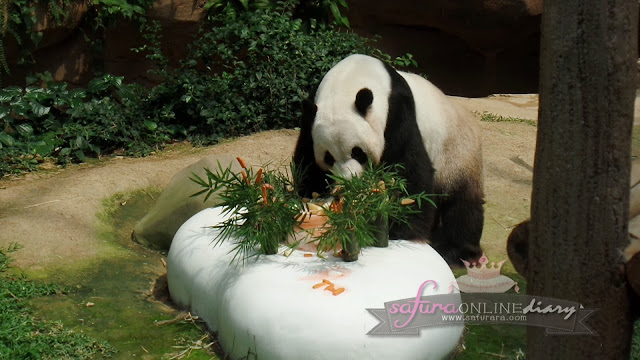 Sambutan Hari Lahir Panda Gergasi di Zoo Negara