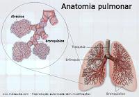 Anatomia dos pulmões