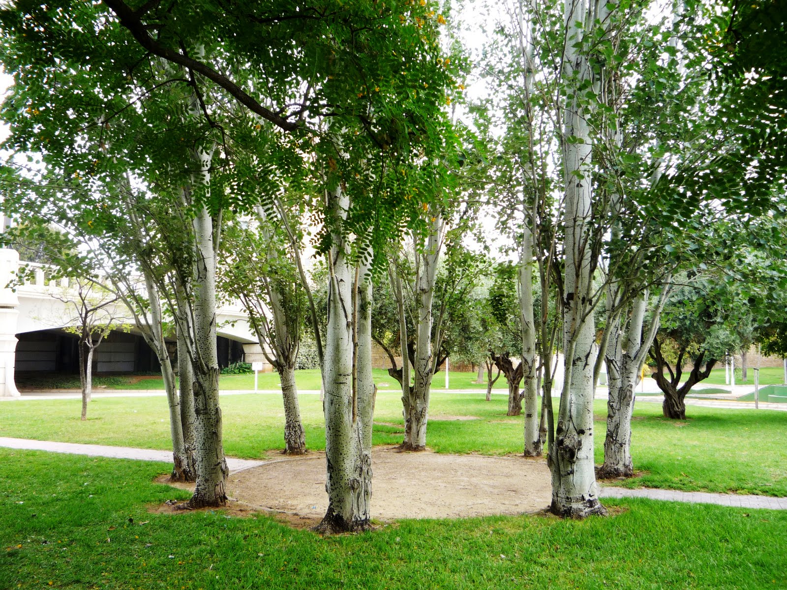 Valencia jardines del r o turia rboles for Casa con jardin valencia