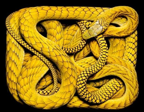 http://4.bp.blogspot.com/-PbKJ-kaf7D0/TpbP3FkTo0I/AAAAAAAADBM/E8R-QSw3ETg/s1600/256713%252Cxcitefun-fascinating-snakes-15.jpg