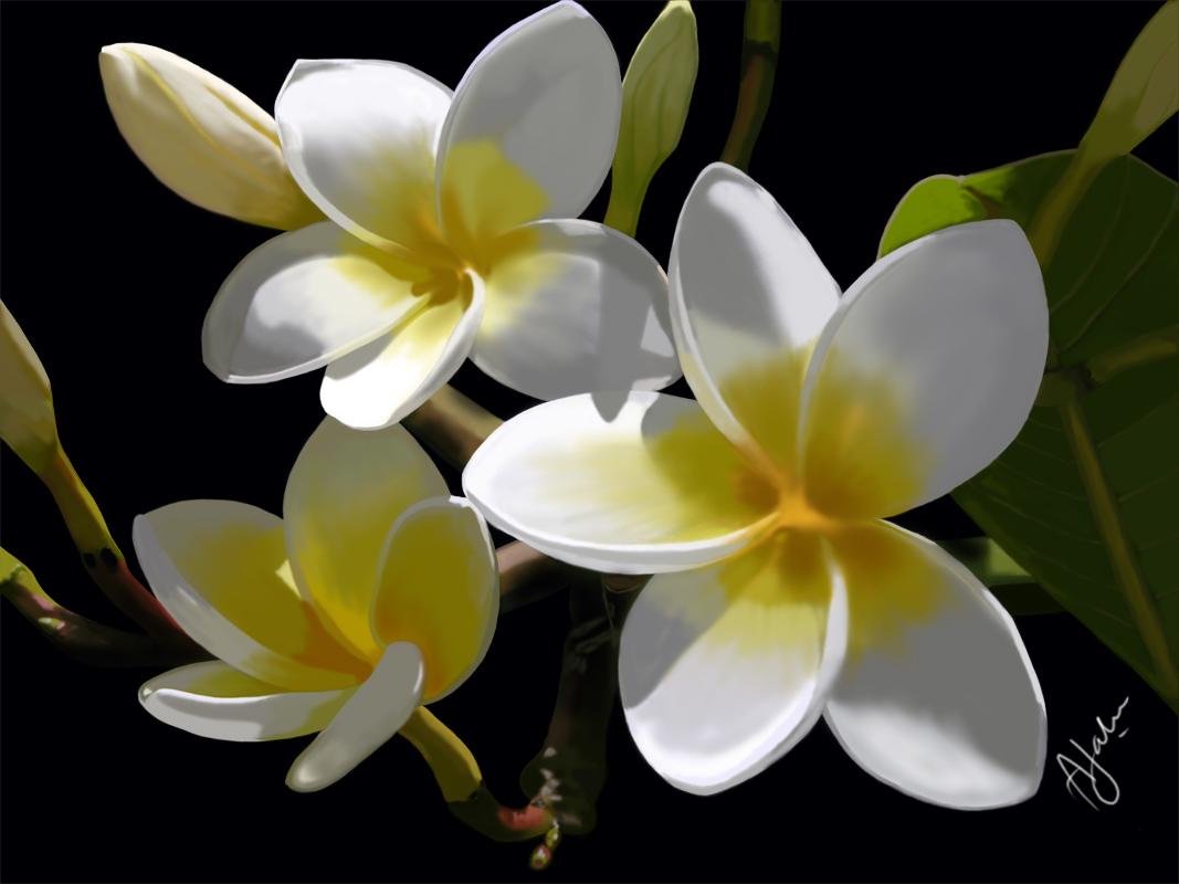 All Beautifull Flowers