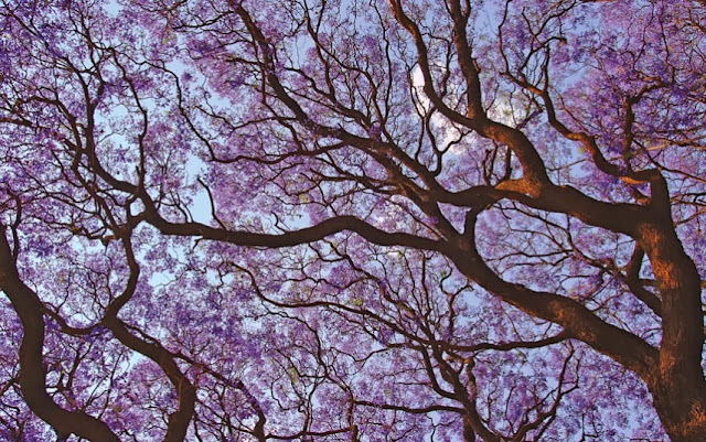 20 of the world's most beautiful trees