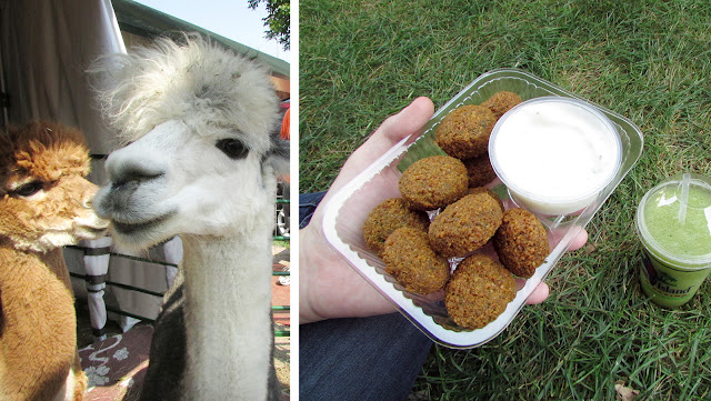 Cutie alpacas & delicious food at the fair
