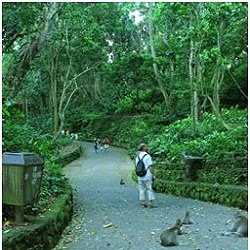Inside Ubud Monket Forest