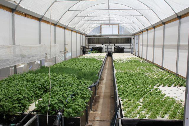 Commercial aquaponics australia information about for Fish for aquaponics