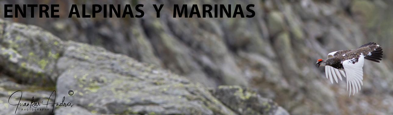 Entre alpinas y marinas.