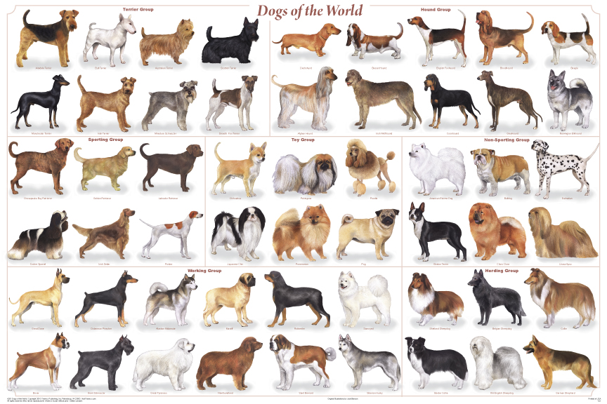 Some of the Many Breeds of dogs