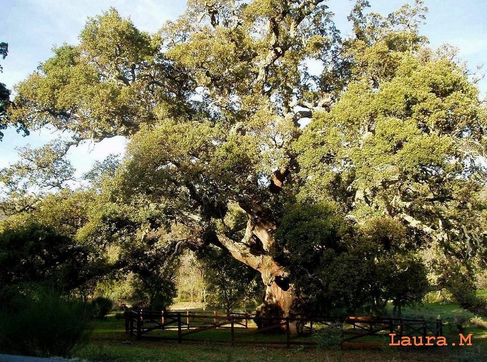 Vida de un árbol singular.