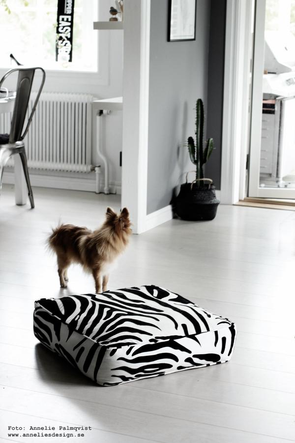 zebra puff, zebrakudde, hundbädd zebra, pomeranian, hund, blandras, kaktus, vitt golv, vardagsrum, kök, köket, industristil, industriellt, gråmålade väggar,