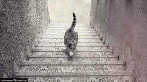 Cuba Korang Lihat Kucing Ini Sedang Naik atau Turun Tangga
