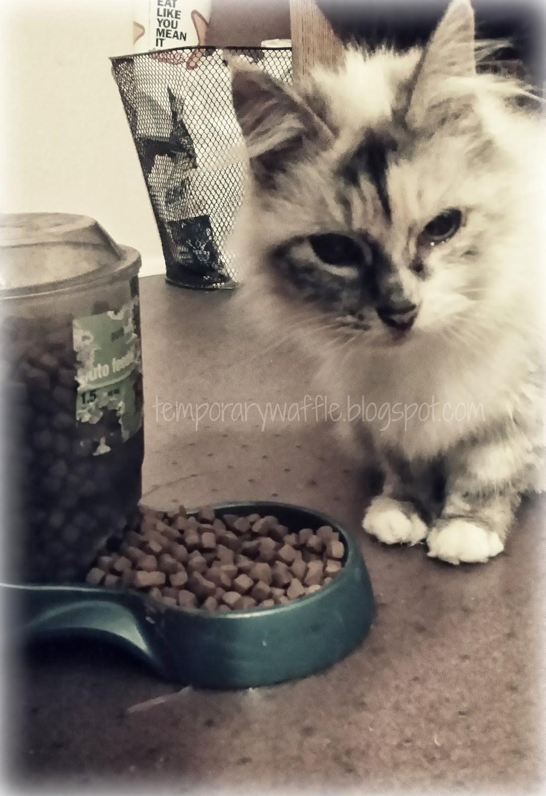Feline Natural Chicken Venison Feast Raw Freeze Dried Cat Food