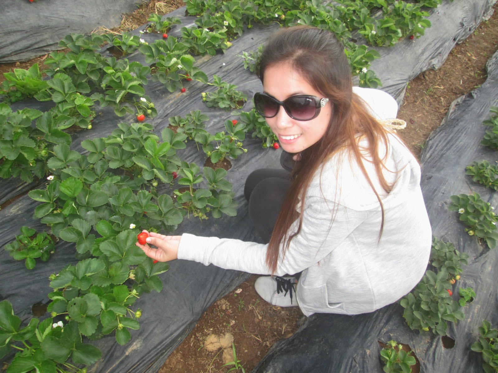 http://rhodatabisula.blogspot.com/2014/05/strawberry-farm-in-baguio-city.html