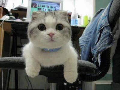 Foto gatito en la silla del escritorio