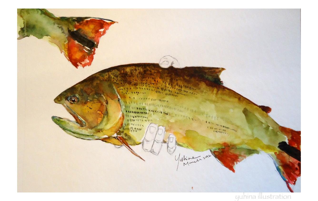 Yuhina illustration golden dorado for Golden dorado fish