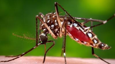 Virus Zika: Obra de los Rockefeller
