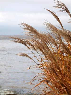 grasses, chesapeake bay, inspiration, water, wind