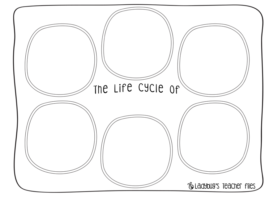 Salmon Life Cycle poster worksheets Ladybugs Teacher Files – Ladybug Life Cycle Worksheet