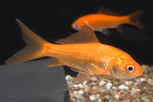 north texas pet supplies plus fish