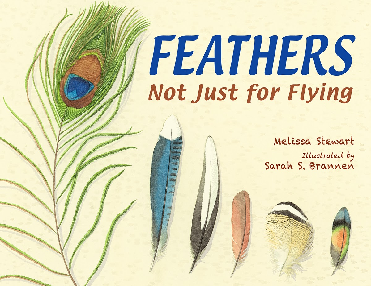 Different bird feathers - photo#10