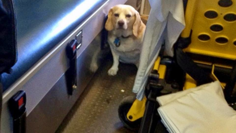 Dog Hitches a Ride, ambulance dog, buddy the dog