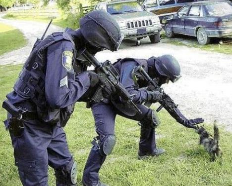 grappige foto: kat met bier, grappige foto: katje en speciale politie ... Yorkshire Terrier 911