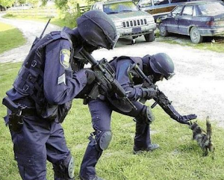 funny picture: kitten and special police force