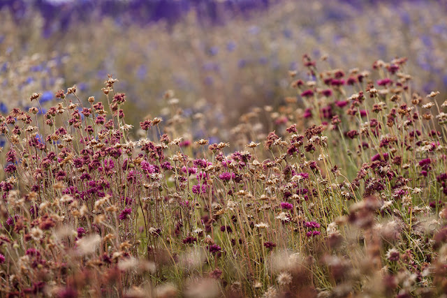 Colourful summer flowers caught on camera by Martyn Ferry Photography