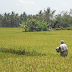 Ca s'est passé à Bali : un ado contraint d'épouser la vache avec qui il avait fait crac crac