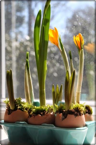 Posadite proljećno cvijeće u svom domu - Moj Vrt Cvijeća