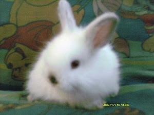 Jersey woolies Rabbit