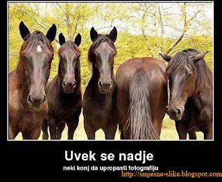 slika, konj, konja, trke
