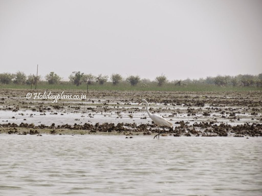 chilika lake birds