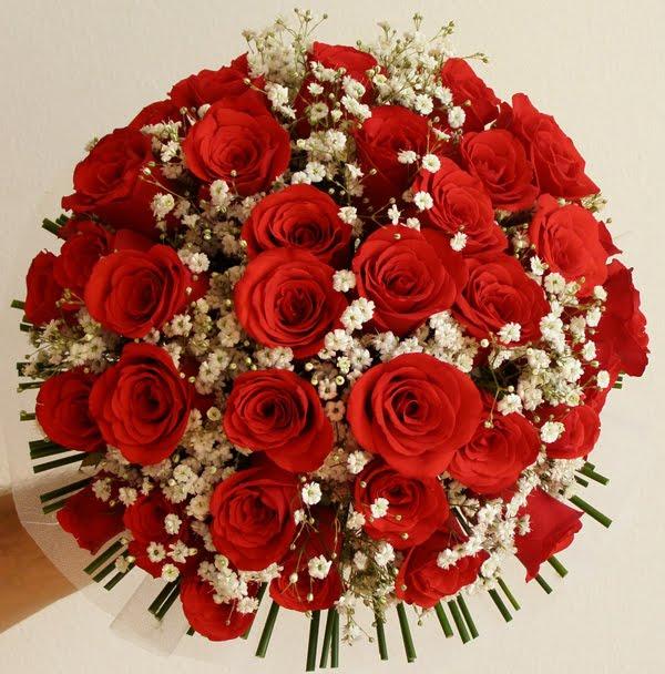 jardim rosas vermelhas:que seria de um jardim cheio de flores se um dia as belas rosas