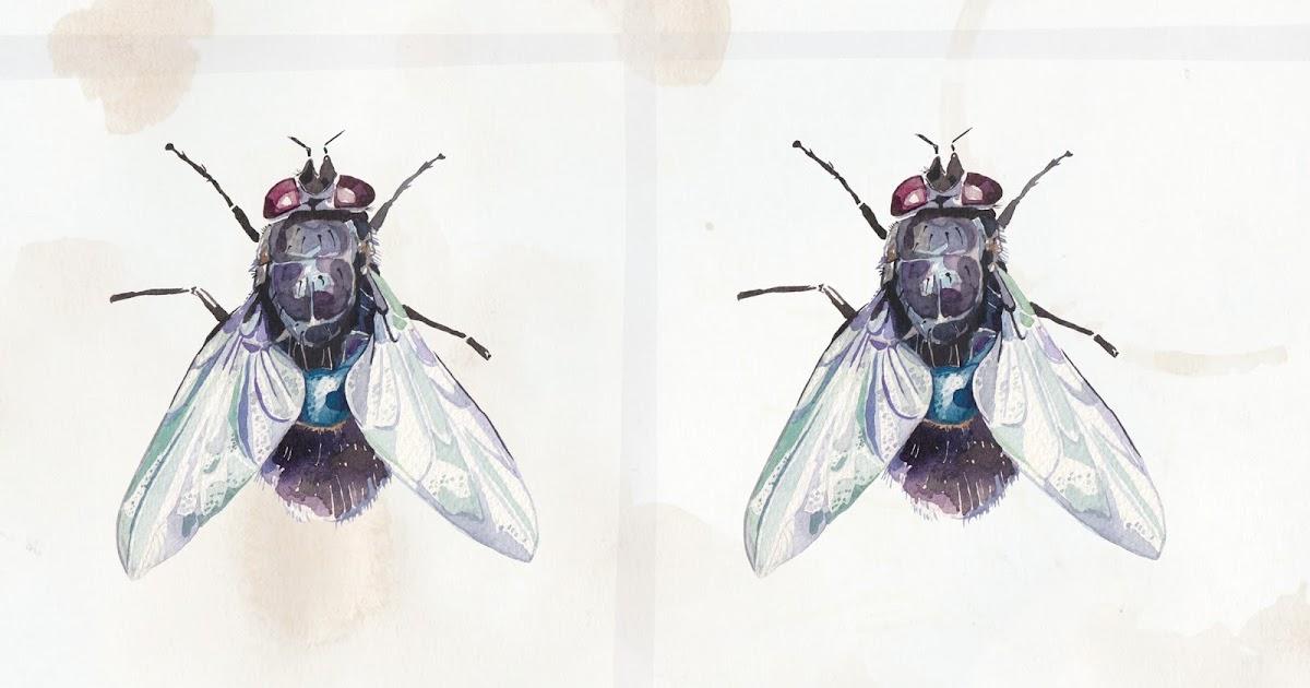 Watercolour Illustrations Holly Exley Illustrator