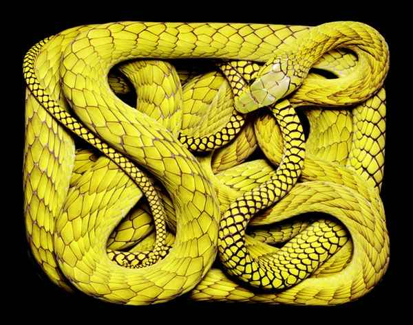 Snake skin -very expensive