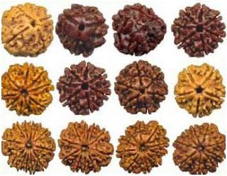 Picture of Rudraksha beads and its Importance | Rudraksha benefits | Rudraksham for healthy living | divine symbol