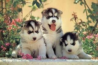 Cachorros, parte 4