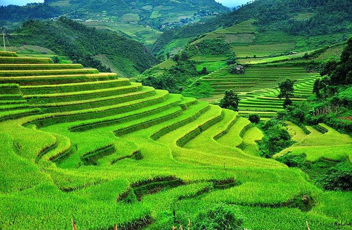 Terraced farms mu cang chai vietnam great panorama picture for What are terraces