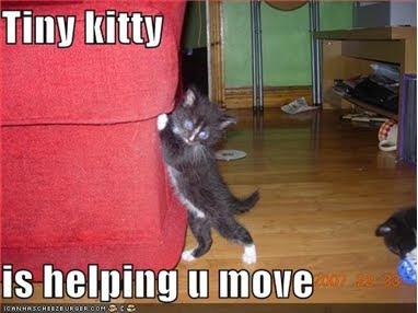 Tiny Kitty helps you move