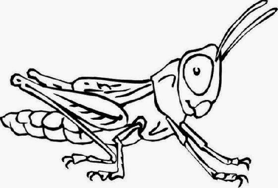 Bugs And Insects Preschool Coloring Pages