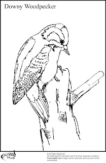 downy woodpecker coloring pages