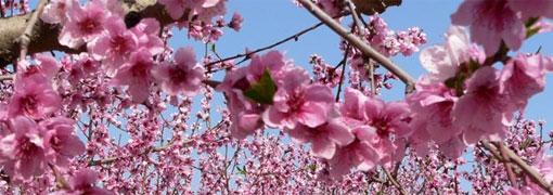 Podrán cortar todas las flores, pero no podrán detener la primavera