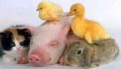 Respeite os animais!!!