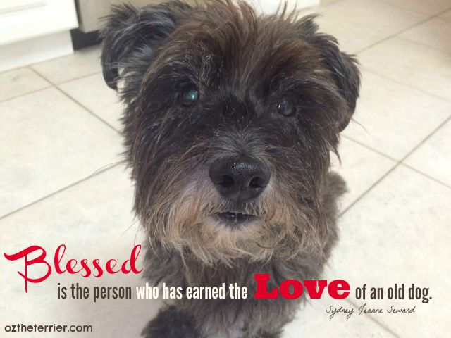 Oz Senior Dog - Blessed is the person who has earned the love of an old dog.