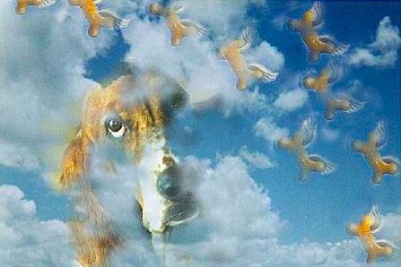 El Cielo de los perros...