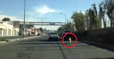 mujer abandona perro en autopista mexicana