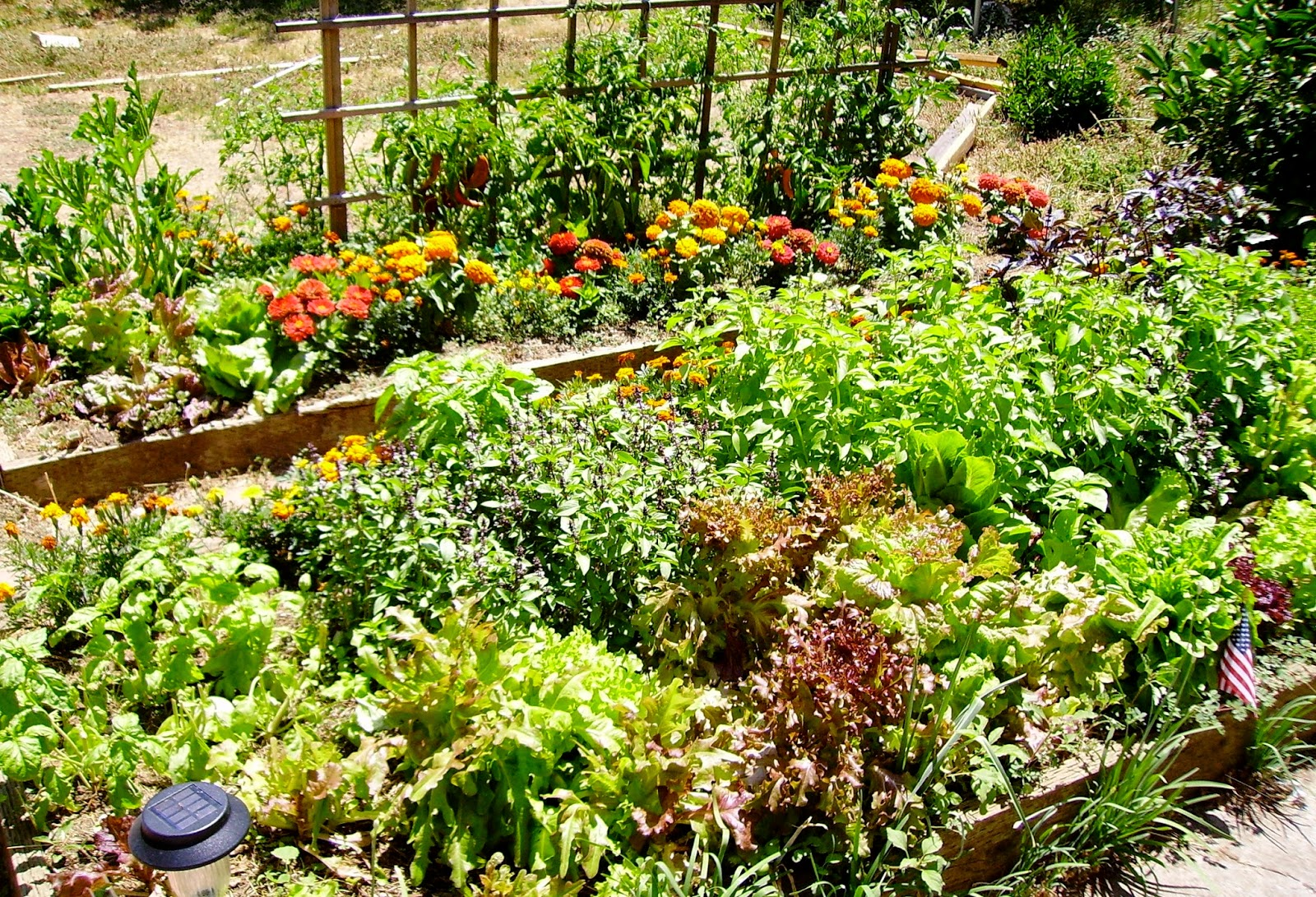 Garden Blog How To Plant A Vegetable Garden