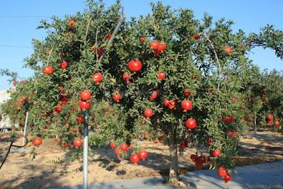 فوائد الفواكه،الصحة والرجيم،الرشاقة